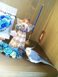 オカメインコのももちゃんと花教室と旅日記-120415_081300.jpg