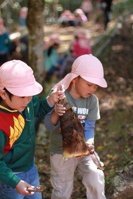 若草幼稚園-筍掘り2