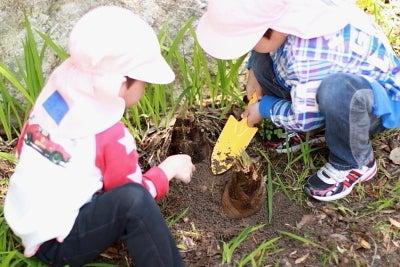若草幼稚園-筍掘り1