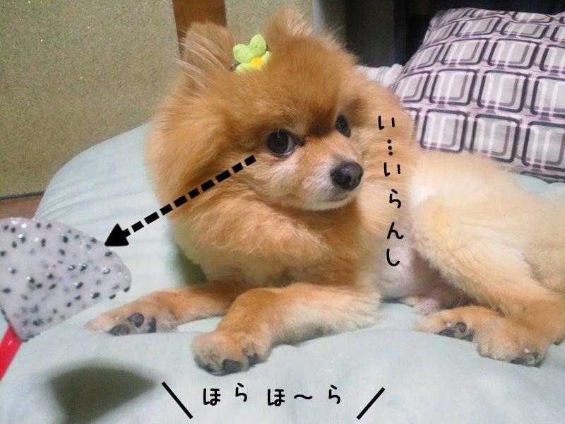 メイプル-ぷる、チラリ