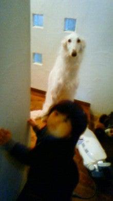 ボルゾイ&花のリング-201204231125000.jpg
