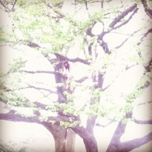 $ノーマ オフィシャルブログ「ノーマの遠吠え。」Powered by Ameba