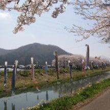 2012 桜(浅水川…