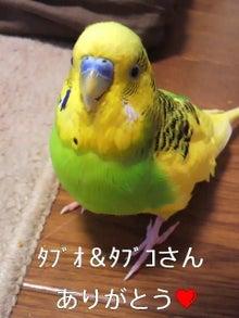 $わがまま王子-2012042515220000.jpg