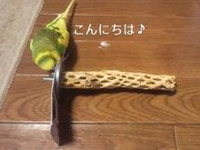 $わがまま王子-2012042515390000.jpg