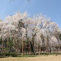 2012 足羽神社し…