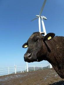 さなごうちらいふ-風車&牛