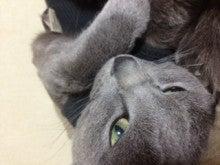 猫鈴館-__.JPG