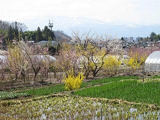 晴れのち曇り時々Ameブロ-花見山周辺からの吾妻山