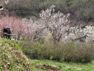 晴れのち曇り時々Ameブロ-花見山