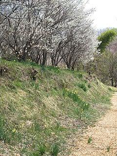 晴れのち曇り時々Ameブロ-花見山散策路