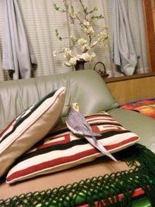 オカメインコのももちゃんと花教室と旅日記-120429_211042.jpg