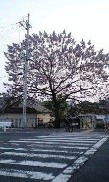 野村流音楽協会 天使のブログ!岸和田三線教室