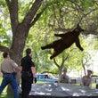 空からクマが降ってく…