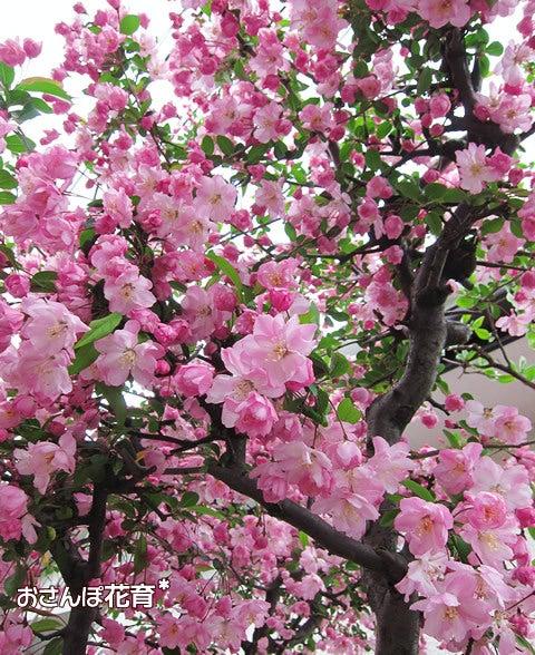 動画で見る!3分フラワーアレンジ-花海棠