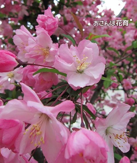動画で見る!3分フラワーアレンジ-花カイドウ とても好き