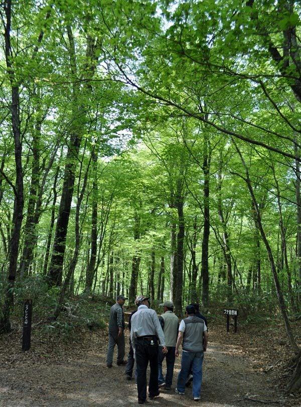 $白神山地ツアーの白神なびスタッフブログ-2012年5月1日の十二湖6