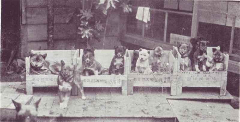 帝國ノ犬達-日本犬