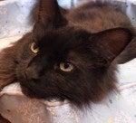 黒猫先生のブログ-ビビたん
