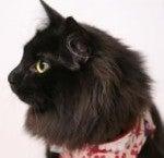 黒猫先生のブログ-先生