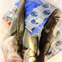 ☆魚♪魚♪魚♪☆