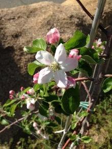 りんごの木の下で-開花