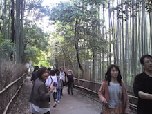 ともちゃんのブログ-竹林の道
