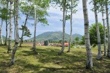 蒜山高原のシラカバ