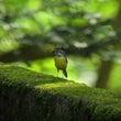 林道鳥見オマケ