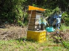 捕獲日本蜜蜂20120505
