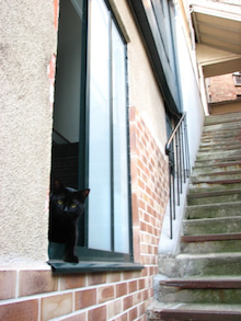パリの猫たち、猫たちのパリ-Piko 2