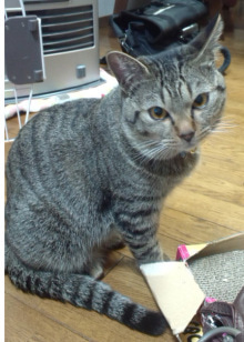 HWJ☆犬猫を助けよう!☆迷子・保護・里親募集 情報集