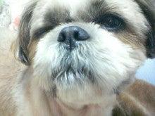 かわいこ犬日記-201203201800.jpg
