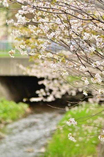 $全てのコスメは美に通ず-千島桜