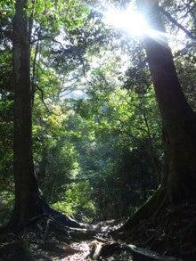 Sion☆セラピスト西山あゆみのブログ-木々