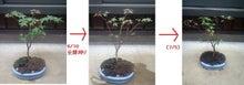 盆栽の楽しさを広めたい-20120508-3