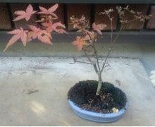 盆栽の楽しさを広めたい-20120508-4