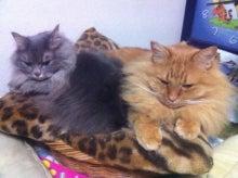 $★bettyのグルメな猫ブログ★-パッチ&ピーチ