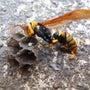 ハチの活動も活発にな…