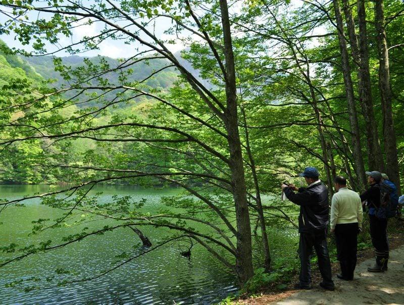 $白神山地ツアーの白神なびスタッフブログ-2012年5月の白神山地「十二湖」の最新情報2