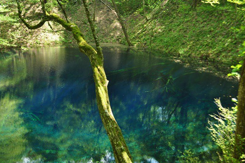 $白神山地ツアーの白神なびスタッフブログ-2012年5月の白神山地「十二湖」の最新情報4