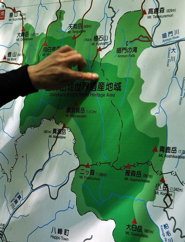 $白神山地ツアーの白神なびスタッフブログ-2012年5月上旬の白神山地「十二湖」の最新情報3