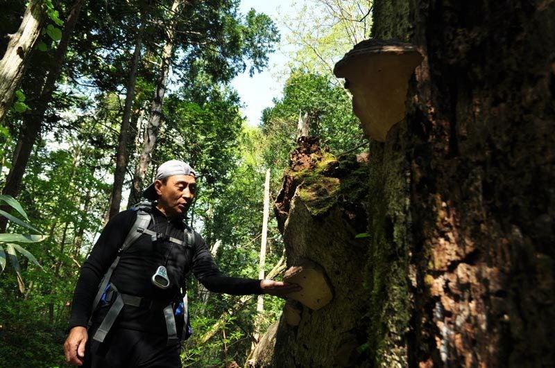 $白神山地ツアーの白神なびスタッフブログ-2012年5月の白神山地「十二湖」の最新情報10