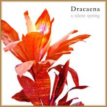 shuumiのブログ-Dracaena