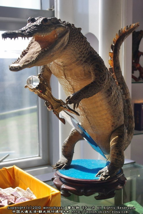 中国大連生活・観光旅行ニュース**-旅順蛇博物館