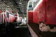 駅長猫コトラの独り言~旧 片上鉄道 吉ヶ原駅勤務~-秋田の庫内の駅長猫