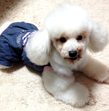 $LOVE'S DOG staff blog