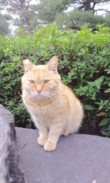 $てぬぐい作家 tenugui chaco のブログ-5/12 猫 2
