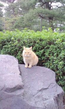 $てぬぐい作家 tenugui chaco のブログ-5/12 猫 1