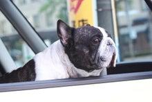 「ぎゃらりーたちばな」更新日記-車上の犬